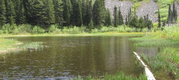 Herman Cr. Trail to Mud Lake