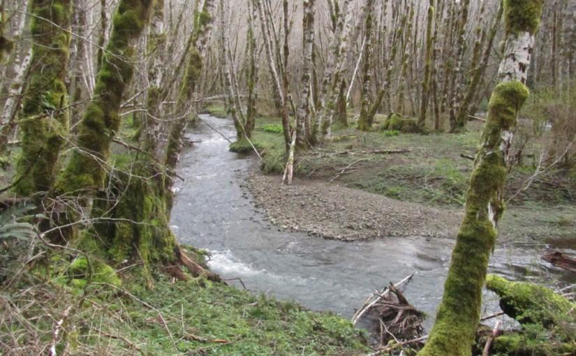 Gale Creek & Storey Burn Hike