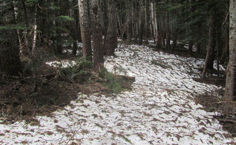 Wyeth Trail Hike