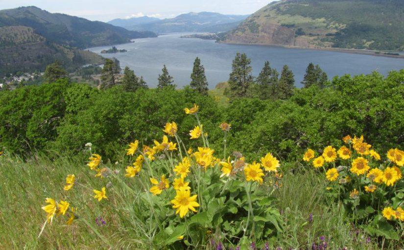 Moiser Flower Hike