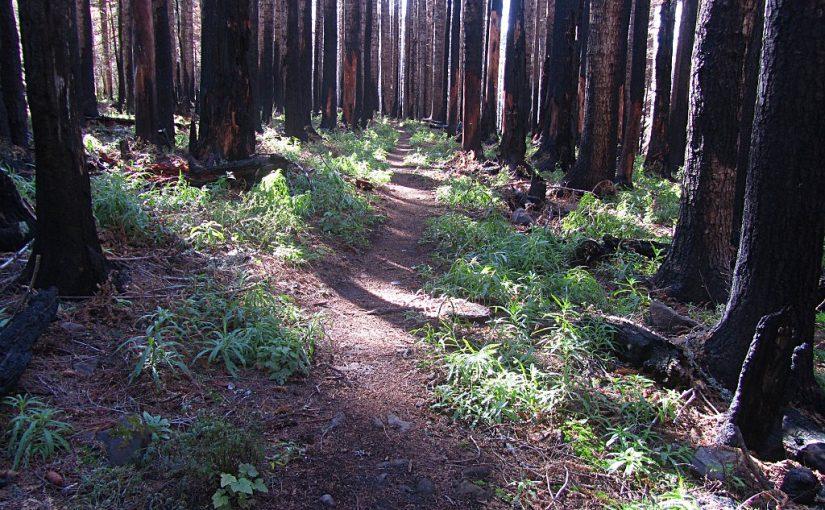 Benson Plateau Hike