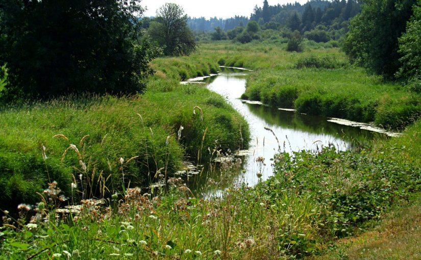 Salmon Creek Greenway Trail